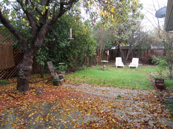 Autumn backyard